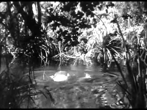 Video Tarzan and Jane swimming download in MP3, 3GP, MP4, WEBM, AVI, FLV January 2017