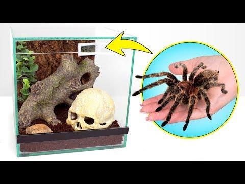 🕷La tarántula explora su nueva casa