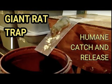 Best Mouse Trap Ever DIY Humane Mousetrap Green Rat Trap for capture and release Rat Eats Moth