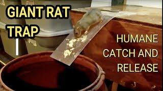 Video Best Mouse Trap Ever DIY Humane Mousetrap Green Rat Trap for capture and release Rat Eats Moth MP3, 3GP, MP4, WEBM, AVI, FLV Oktober 2018