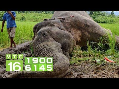 Động vật hoang dã bên bờ vực tuyệt chủng | VTC16 - Thời lượng: 15 phút.