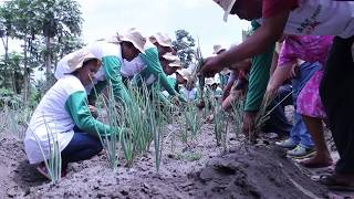 Video Bertanam Bawang Merah Biji MP3, 3GP, MP4, WEBM, AVI, FLV September 2019