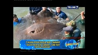 Video On The Spot - 7 Ikan Raksasa Air Tawar MP3, 3GP, MP4, WEBM, AVI, FLV Juli 2018