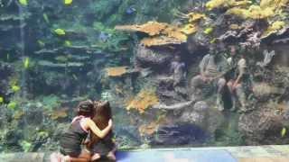 Atlanta (GA) United States  city images : Atlanta Georgia Aquarium World's Largest