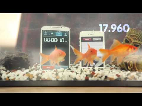 IP PROTECT - Protect your bubble dunk tested the Apple iPhone 5 & Samsung Galaxy S4 in a fish tank full of water but which survived for the longest?? No fish were harmed ...