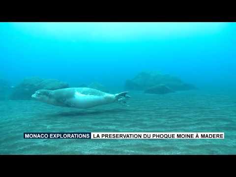 Préservation du Phoque Moine à Madère