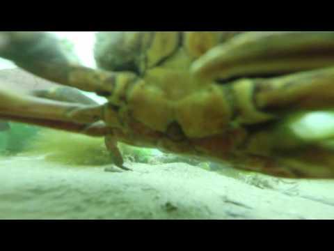GoPro, пролежавшая на дне моря около года, сняла на видео одинокого краба