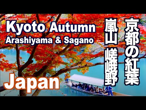Autumn Leaves in Kyoto - Arashiyama, Sagano