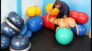 Building strong stops with Flash (canine conditioning exercises)