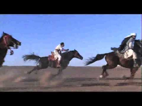 Arabian Horse Tribute - Videos and Pictures