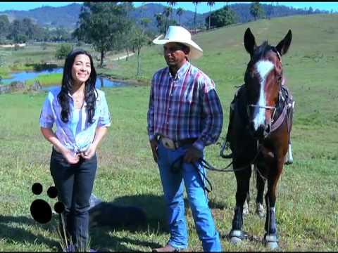 Vídeo: Esse Bicho é o Bicho - Astralian Cattle Dog