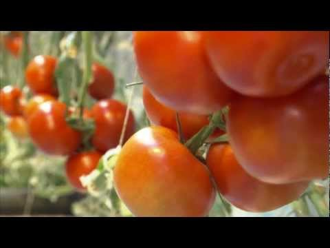 Meijer - Fresh Michigan-grown tomatoes year-round