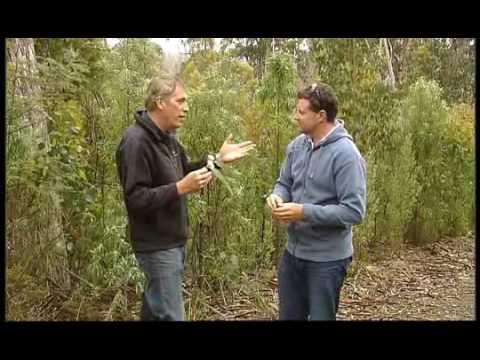 Going Bush 2- Episode 4 – The Swift Parrot