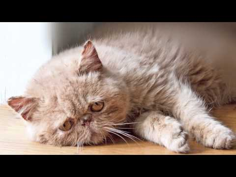 sad - The diary of sad cats everywhere :( Music : http://bit.ly/1479bzw Inspired by : http://www.buzzfeed.com/copyranter/the-best-of-first-world-cat-problems (i am...