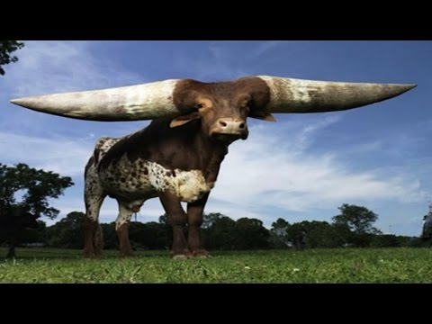 Top 10  Biggest And Largest Animals In The World - Most Biggest Animals 2017