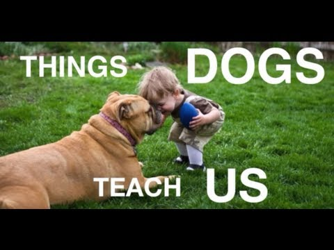 teach - When humans bring a dog into their lives, they are most often looking for a companion; what they may not realize is that they are getting a teacher as well. ...