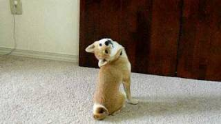 Hilarious Dog's Flexible Neck =))