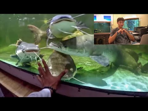 "REACTING To FISH RESCUE AQUARIUM! Going into the Monster Fish Tank!""_Akvárium"
