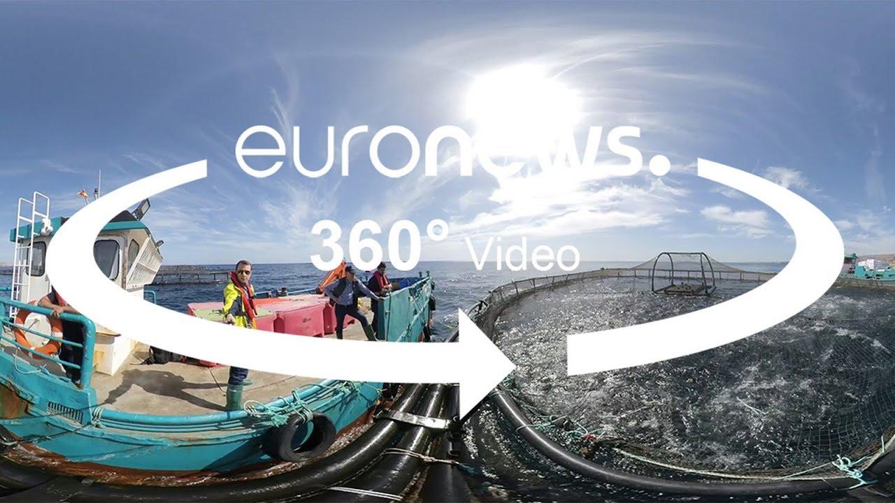 Ιχθυοκαλλιέργειες στην ανοικτή θάλασσα: Η περίπτωση της Αquanaria