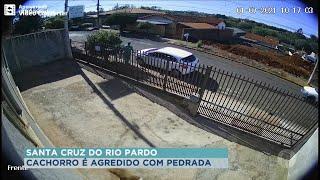 Coletor agride cão com pedrada em Santa Cruz do Rio Pardo