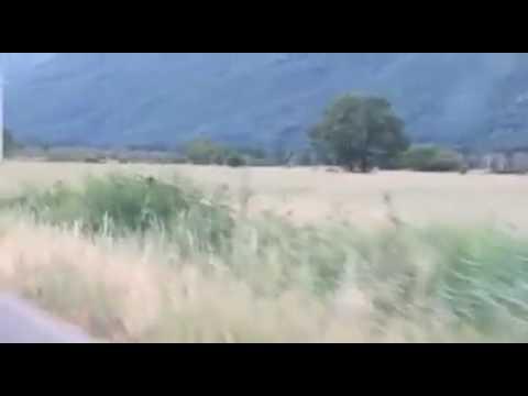 Orso attraversa la strada: spettacolo della natura in Abruzzo VIDEO