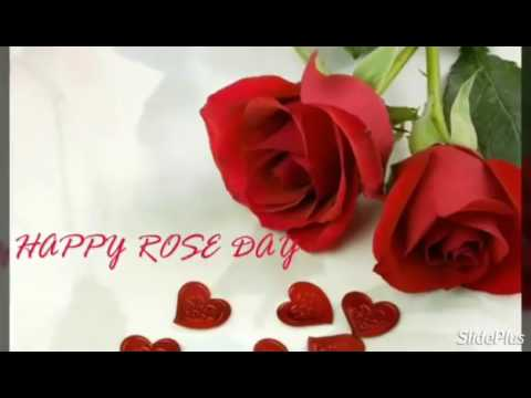 Mein jo jeer aha rose day special video song