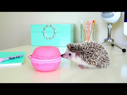 hedgehog - Cute Hedgehog Clips ~ Hedgehog Escape.