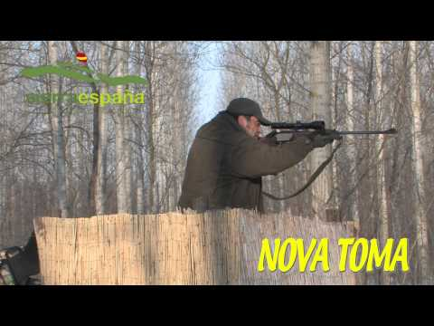 CAZA NOVATOMA LANCES , (Huntig vídeo) con SIERRA ESPAÑA, Batida de Jabalis