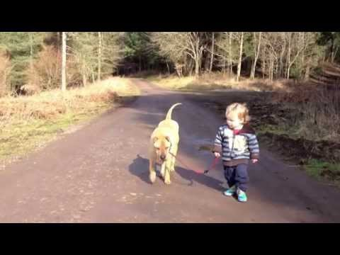 Cute kid walking dog stops to play in the puddle.