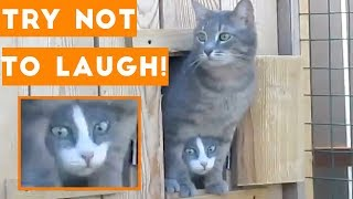 Video Try Not To Laugh Funniest Animal Compilation 2018 | Funny Pet Videos MP3, 3GP, MP4, WEBM, AVI, FLV Agustus 2019