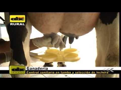 ganado leche - En este bloque, el Dr. Celso Rolón, explica sobre el manejo y selección del ganado lechero.