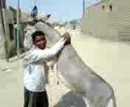 تحشيش عراقي   الرومانسيه العراقيه