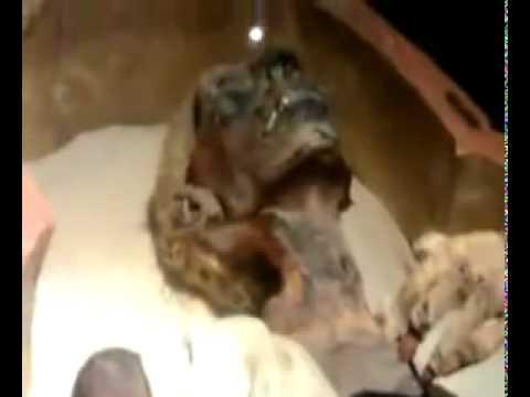 firon - www.PakVip.Com ,,feron.dead body of FIRON (islam)by Khan www.PakVip.Com.