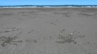 Yeppoon Australia  city photo : Time Lapse crab sand ritual Yeppoon Australia