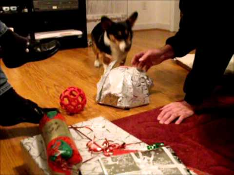 Merry Puppy Christmas :: Gigi and Lady Opening Christmas Presents