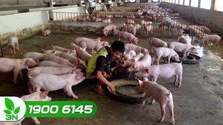 Nông nghiệp | Năm 2018 chăn nuôi được giá và tăng trưởng mạnh