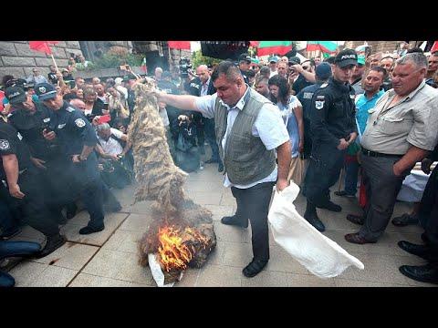 Bulgarien: Landwirte protestieren gegen Massenkeulu ...