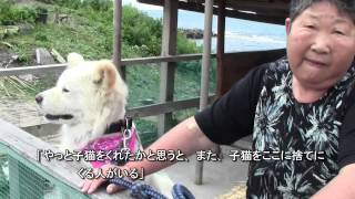 Nonton                                   2013 08 04  Akita Dog Film Subtitle Indonesia Streaming Movie Download