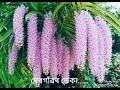 """""""দেৰগাঁৱৰ ডেকা """" Dergaonor Deka (latest Assamese Song)"""