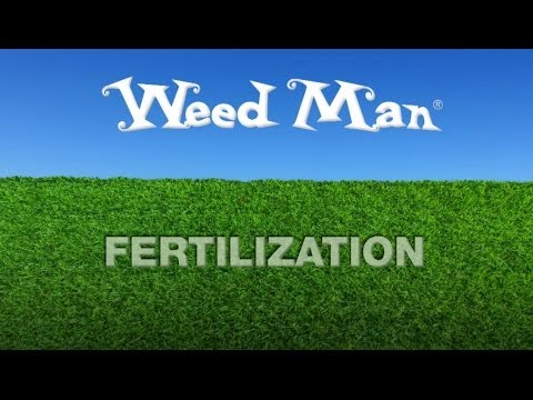 how to fertilize weed