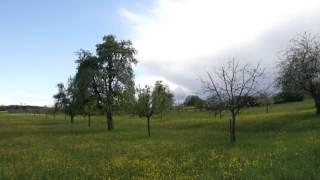 #621 Die Züchtung kernloser Apfelsorten