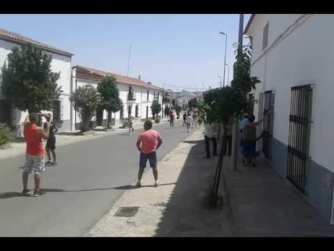 Encierro en Bodonal de la Sierra (Badajoz).