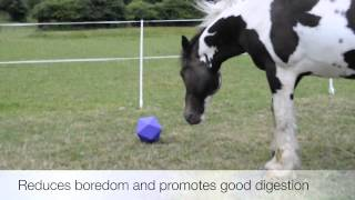 Horse Boredom: How to spot it and what you should do.