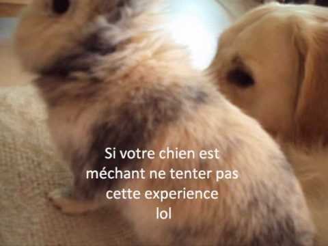 Quelques méthodes de dressage d'un lapin
