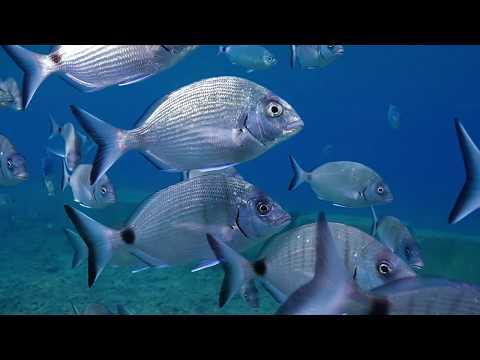 Rethink Fish
