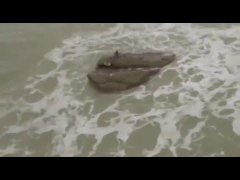 Mermaide Caught On Video Must See!!