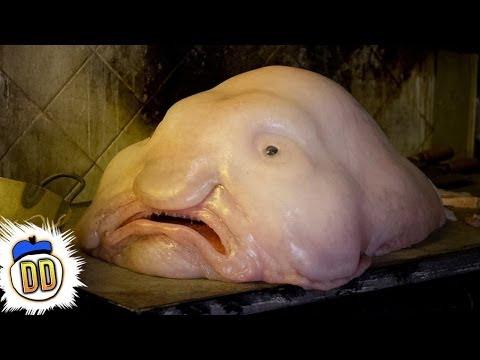 15 Scary Deep Sea Creatures