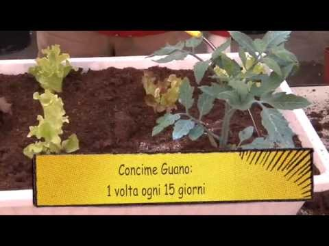 How to fertilize the garden in pots. Gardening lessons Compo