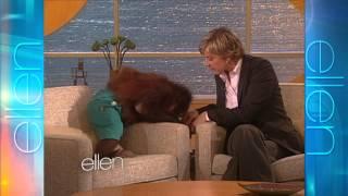 Video Memorable Moment: Precious the Orangutan MP3, 3GP, MP4, WEBM, AVI, FLV November 2018