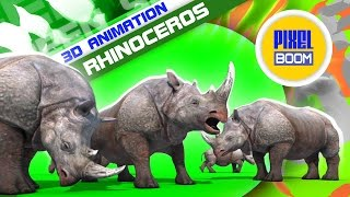 Green Screen Group of Rhinoceros Eats - Footage PixelBoom